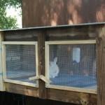 ghid-crestere-iepuri