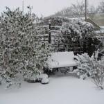 Lucrari in gradina iarna