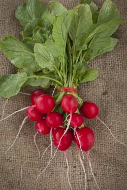 Seminte de Ridichi Cherry Belle