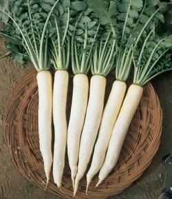 Seminte de Ridichi White Long