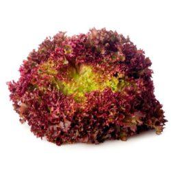 Seminte de Salata Lollo Rossa