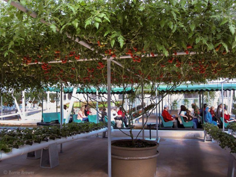 copac-rosii-6