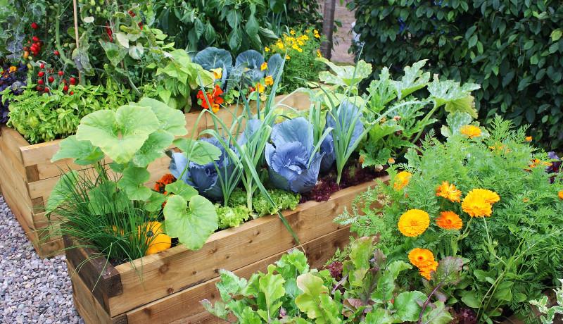 Culturi asociate legume
