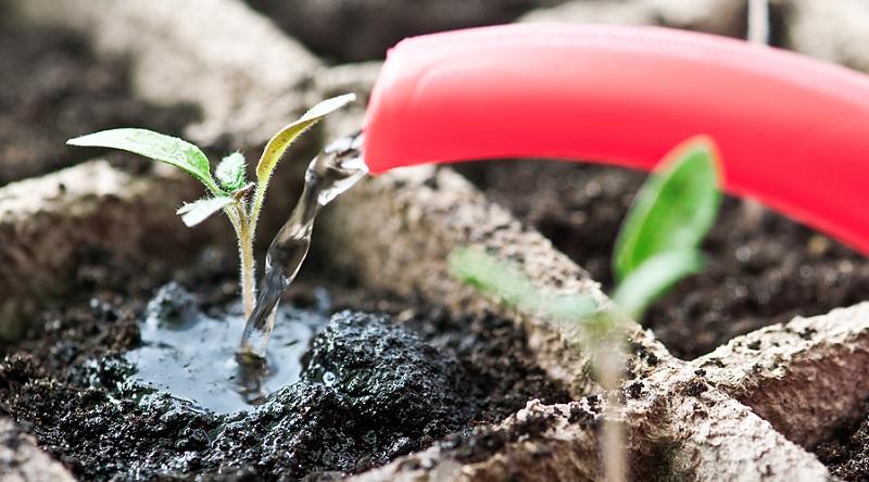 Cum pastrezi umiditatea optima