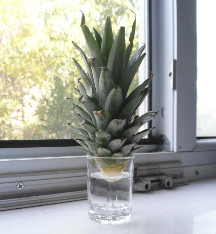 ananas-pahar