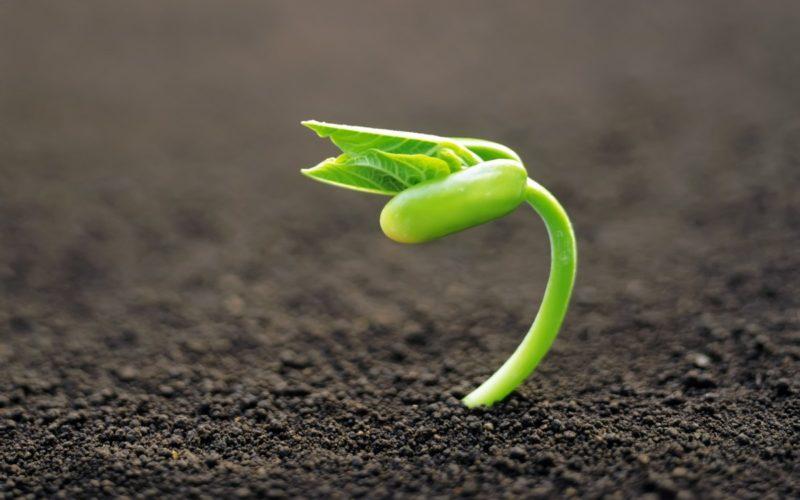 inmultirea-plantelor